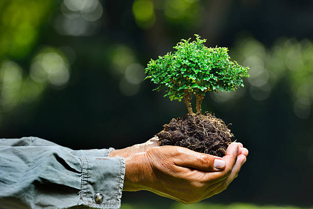 Small plant Farmer's hands holding a small tree on nature background tree hugging stock pictures, royalty-free photos & images
