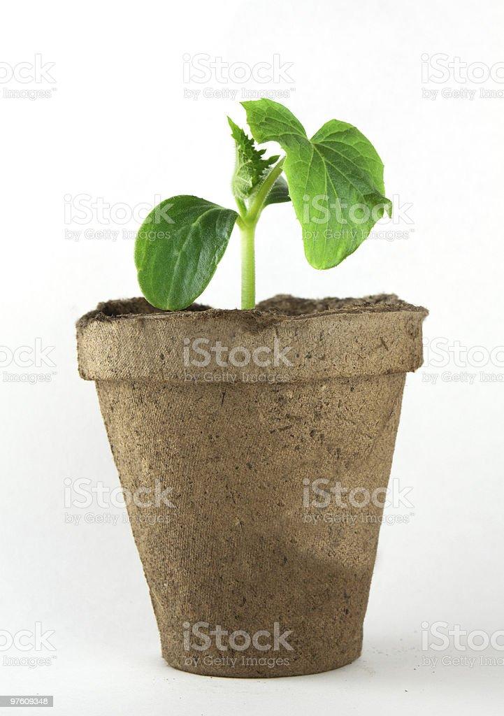 Small plant royaltyfri bildbanksbilder