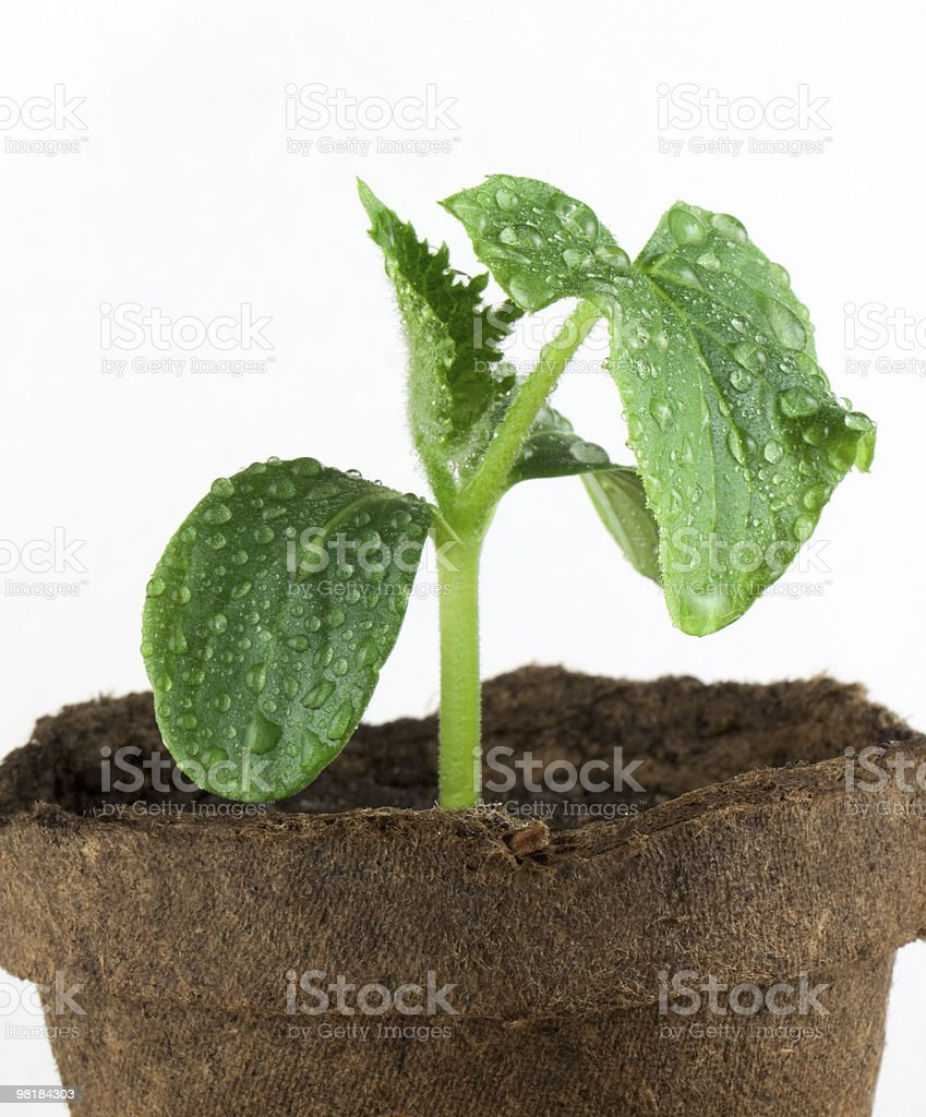 Small plant royalty-free stock photo