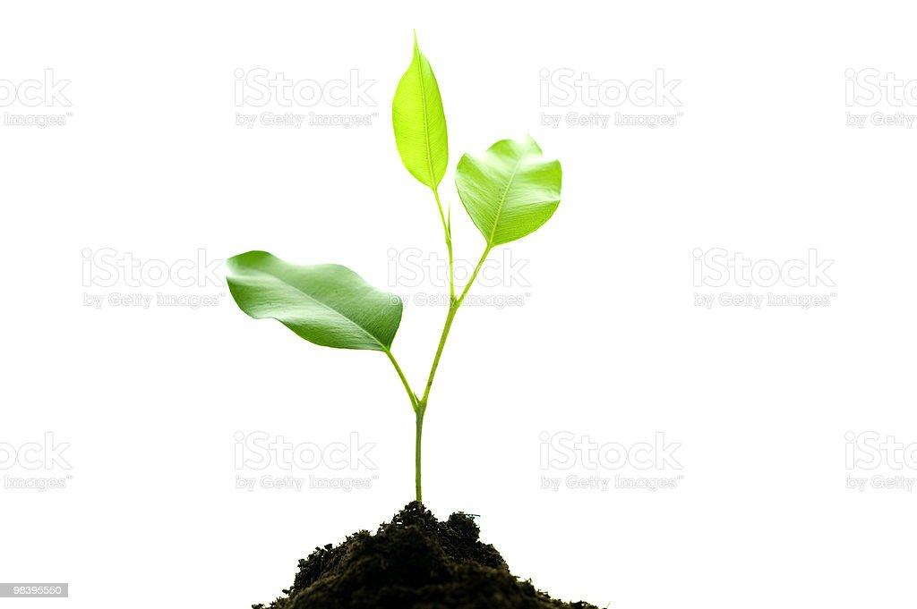 small plant royalty-free stock photo