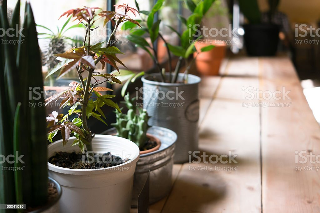 Small plant pot displayed in the window stock photo