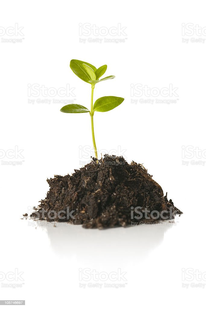 Small Plant Seedling Isolated on White stock photo