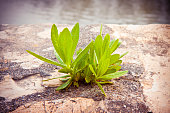 istock Small plant was born in an inhospitable place - power of life concept image 980244742