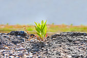 istock Small plant was born in an inhospitable place - power of life concept image 985553754