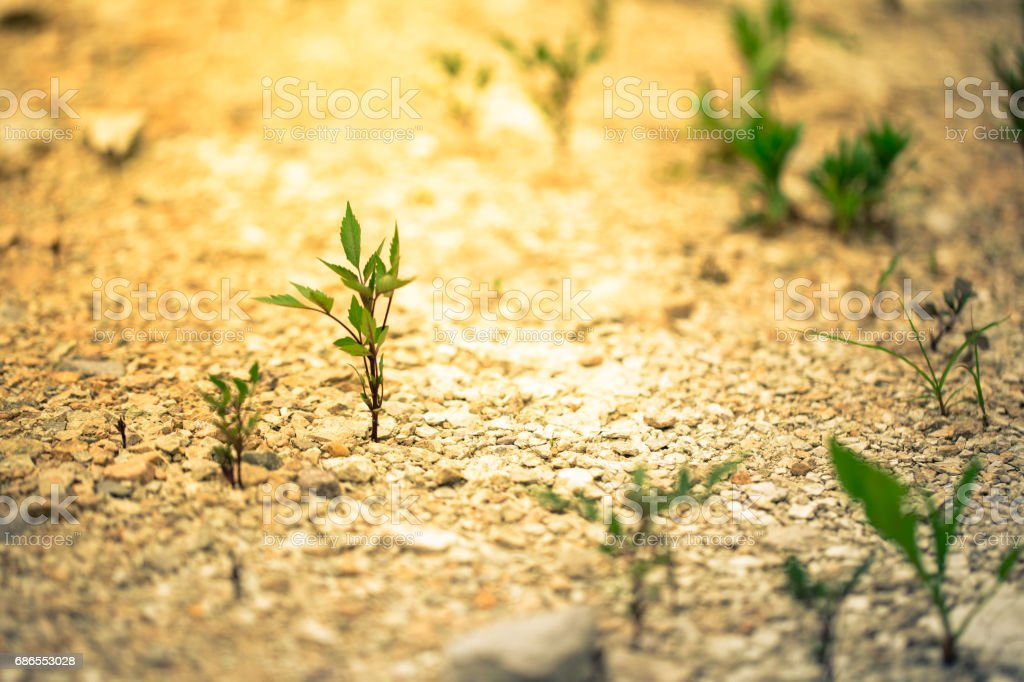 Small plants growing on the gravel road royalty-free stock photo