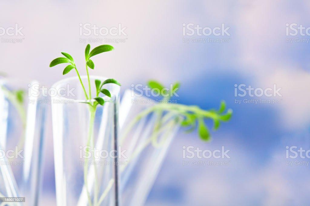 Kleine Pflanzen in Reagenzgläsern – Foto