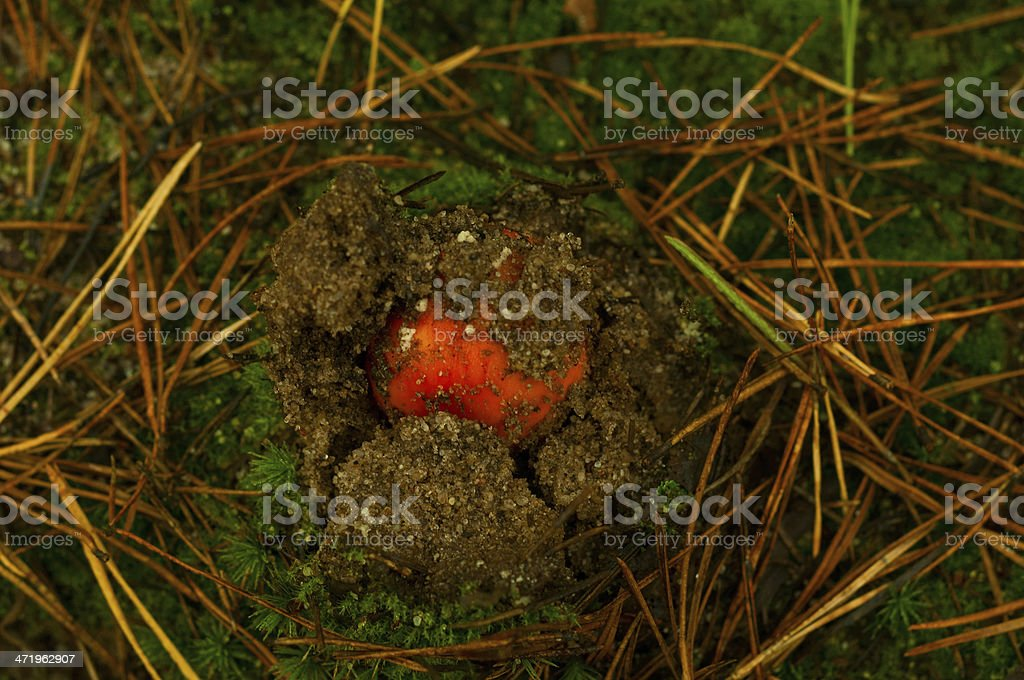 small poisonous mushroom stock photo
