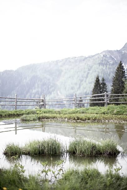 Small Pond stock photo