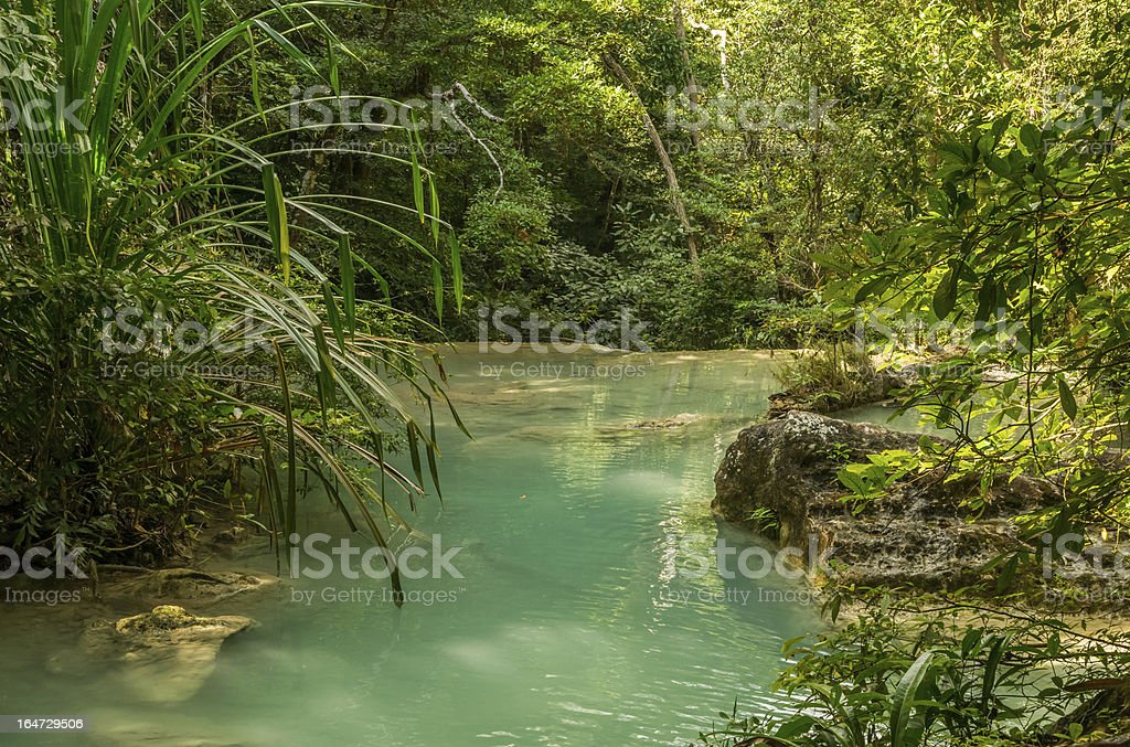 Small pool in jungle stock photo