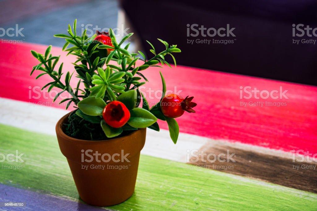 small pot royalty-free stock photo