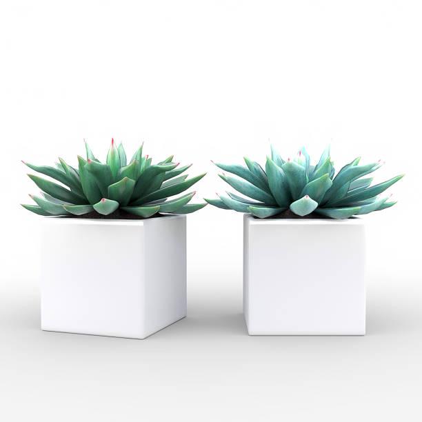 kleine topfpflanze - sukkulenten - keramik vase stock-fotos und bilder