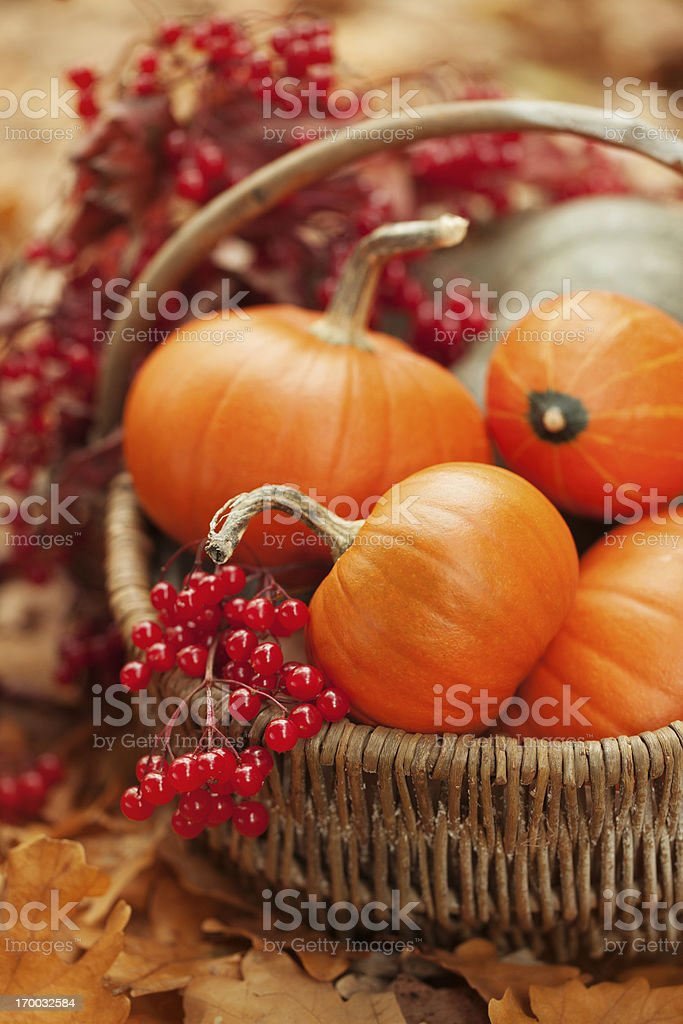 Small pumpkins and ashberries in a basket royalty-free stock photo