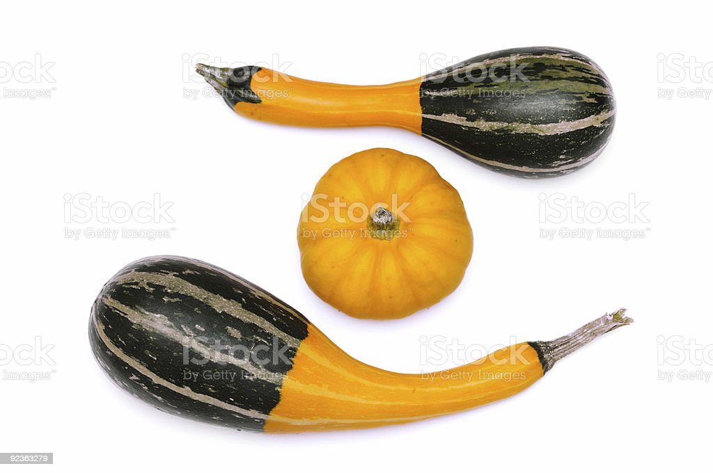 Small pumpkins royalty-free stock photo