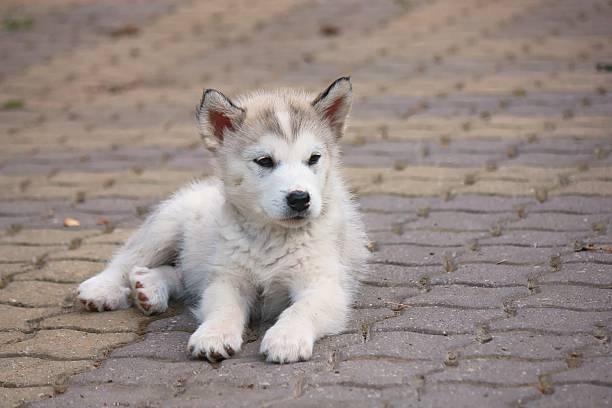 Small puppy stock photo