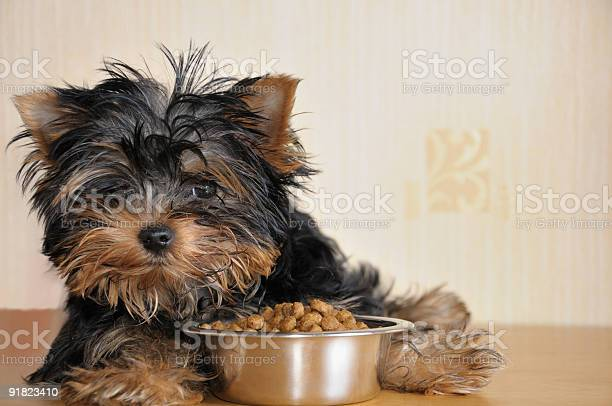 Small puppy sitting by a bowl of food picture id91823410?b=1&k=6&m=91823410&s=612x612&h= pnj4b1mgnnqunv2ukwcrn94l9adxls7obc2ugzkhys=