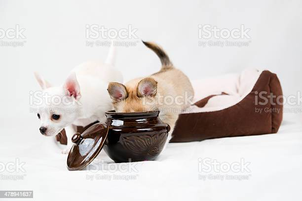 Small purebred puppies on white background picture id478941637?b=1&k=6&m=478941637&s=612x612&h=n9g3gs1yntxlo hqx6cmd1xaqiivsnz0zlp kyhd028=