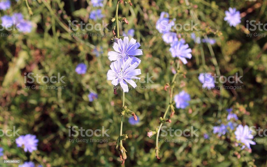 Small Purple Flower royalty-free stock photo