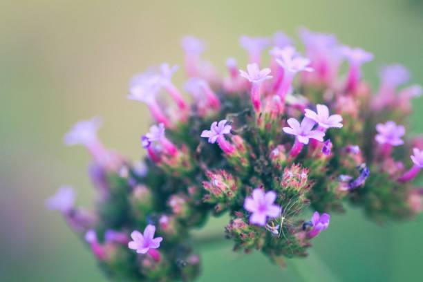 Small purple flowers and beautiful background picture id1299719680?b=1&k=6&m=1299719680&s=612x612&w=0&h=tgohfyiu jqkez8rtvso4tvtgpyadhffts4jlsibir4=
