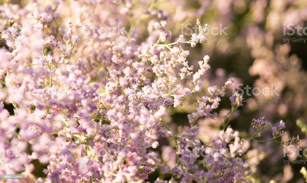 Small Purple Flowers On A Tree Stock Photo Download Image Now