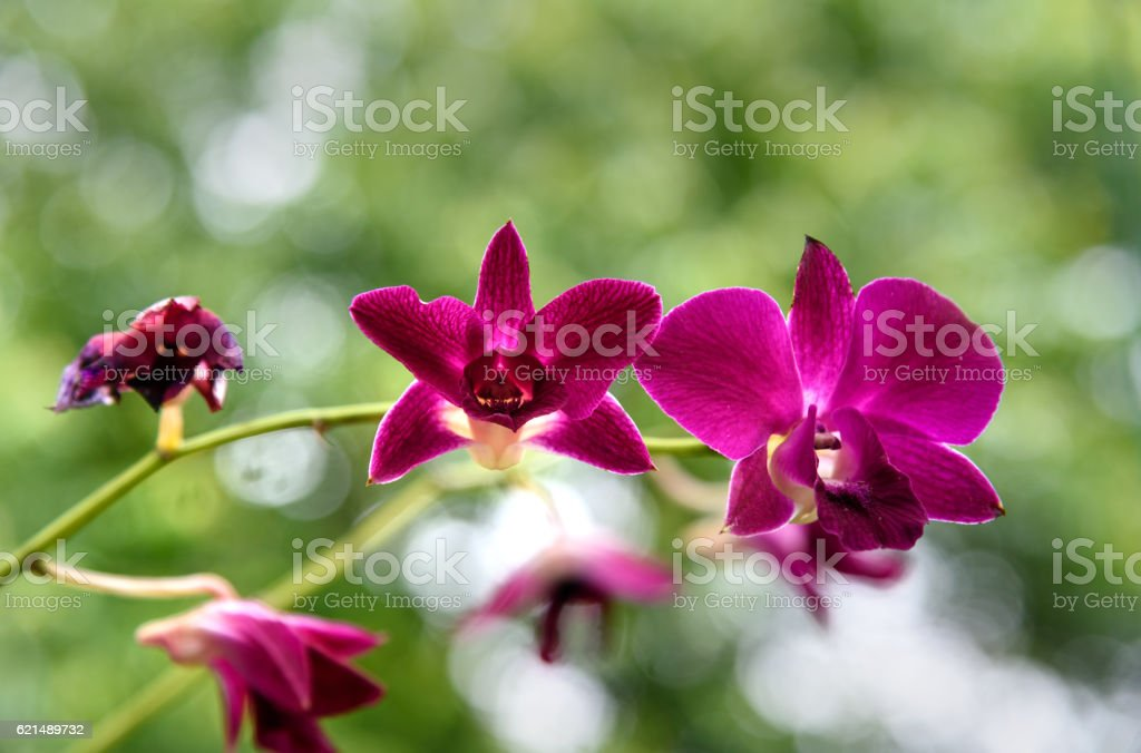 Small purple orchids on green foto stock royalty-free