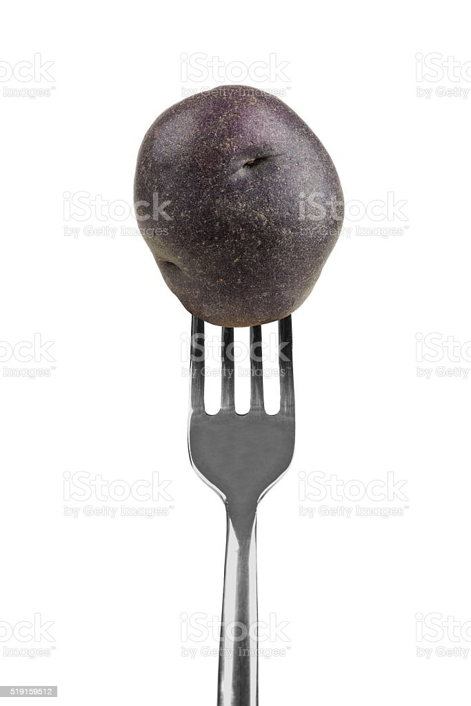Small purple potato on a fork isolated on white stock photo