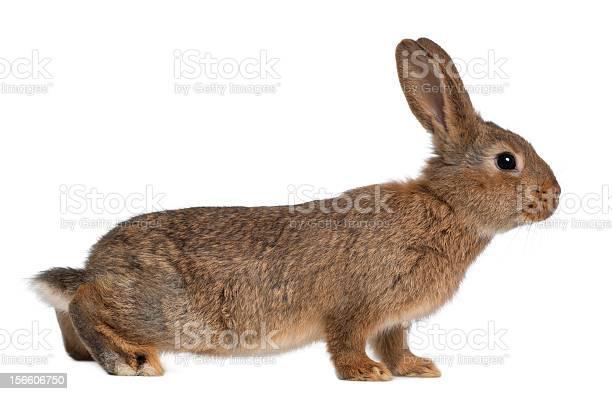 Small rabbit isolated on white background picture id156606750?b=1&k=6&m=156606750&s=612x612&h=yravfawt 6st qfbs teya3rto1 yhu hoe0aokhlzm=
