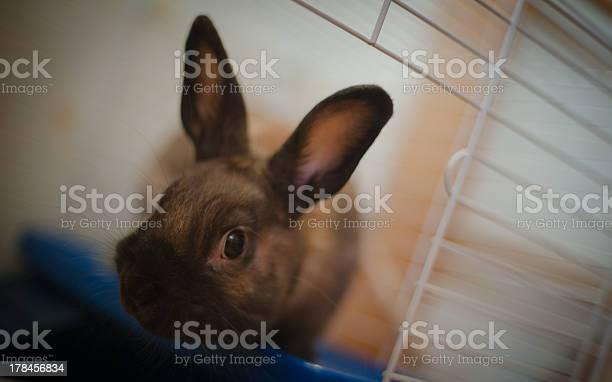 Small rabbit picture id178456834?b=1&k=6&m=178456834&s=612x612&h= omyg2lvqaibzfa4c3pbvk7j5bmb0dxrylirwrd1ey4=