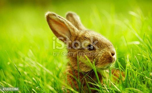 istock small rabbit sitting in grass 474031094