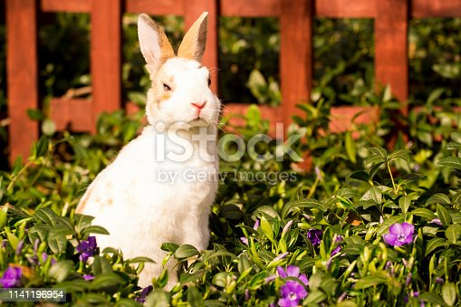 istock Small rabbit sitting in the grass 1141196954