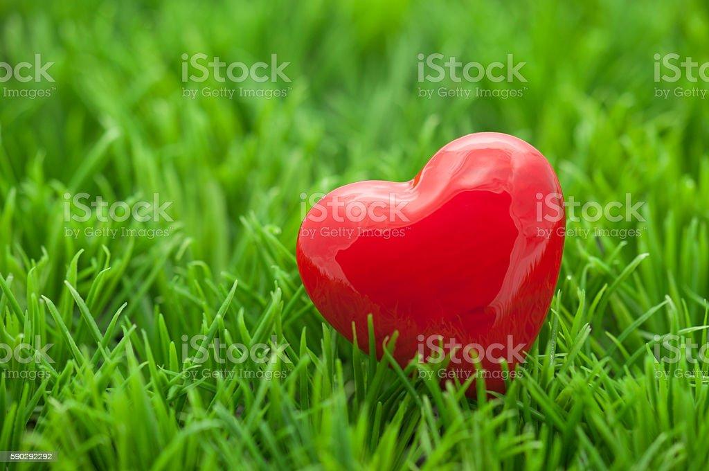 Small red heart on the grass royaltyfri bildbanksbilder