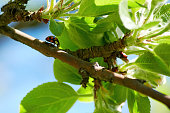 Small red ladybug on an apple tree branch between the leaves. Summer nature backgrounds