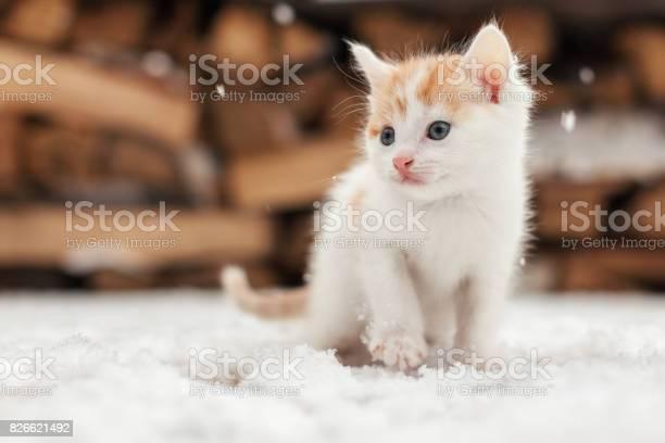 Small red lonely kitten on snow picture id826621492?b=1&k=6&m=826621492&s=612x612&h=mwebo3gqqit 8ejuv32dgvbz1niubncu 8xkcg6fwm4=