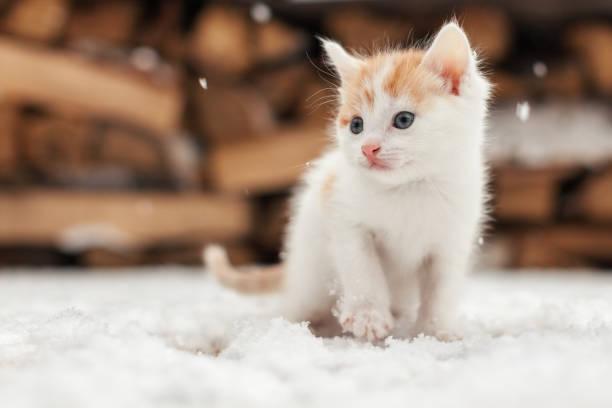Small red lonely kitten on snow picture id826621492?b=1&k=6&m=826621492&s=612x612&w=0&h=8bz2rkx  9ghimxohem9w4ie3qtss7nhlmvonvq1qh4=