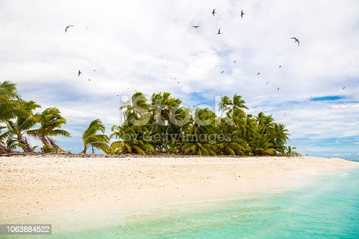 Small remote tropical island (motu) overgrown with palms in azure turquoise blue lagoon. Yellow sandy beach, big flock of birds flying above. Funafuti atoll, Tuvalu, Polynesia, South Pacific, Oceania