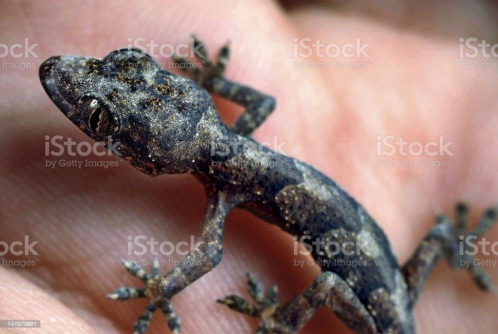 Small Reptile stock photo