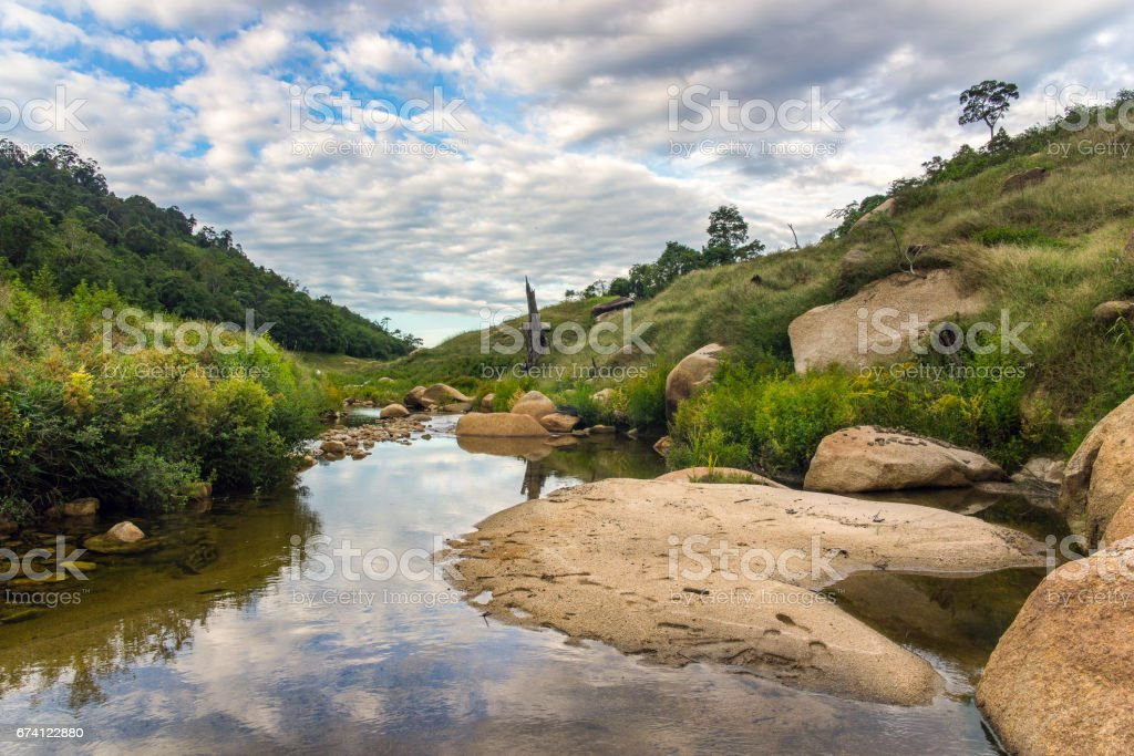 small river among the forest royalty-free stock photo