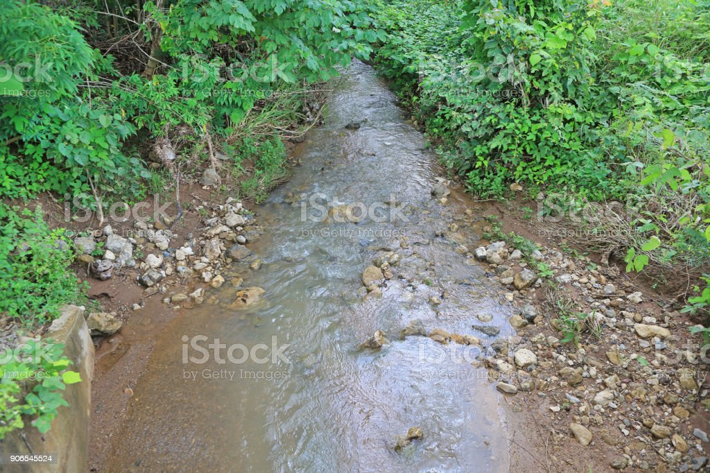 Small river among trees in a forest. stock photo