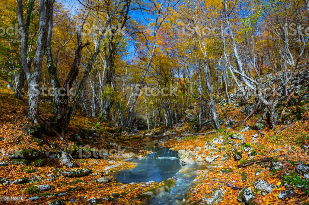 small river in a autumn mountain canyon royalty-free stock photo