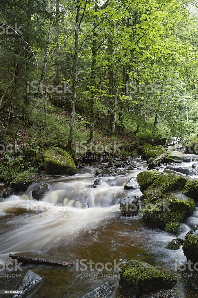 small river in green Forest royalty-free stock photo