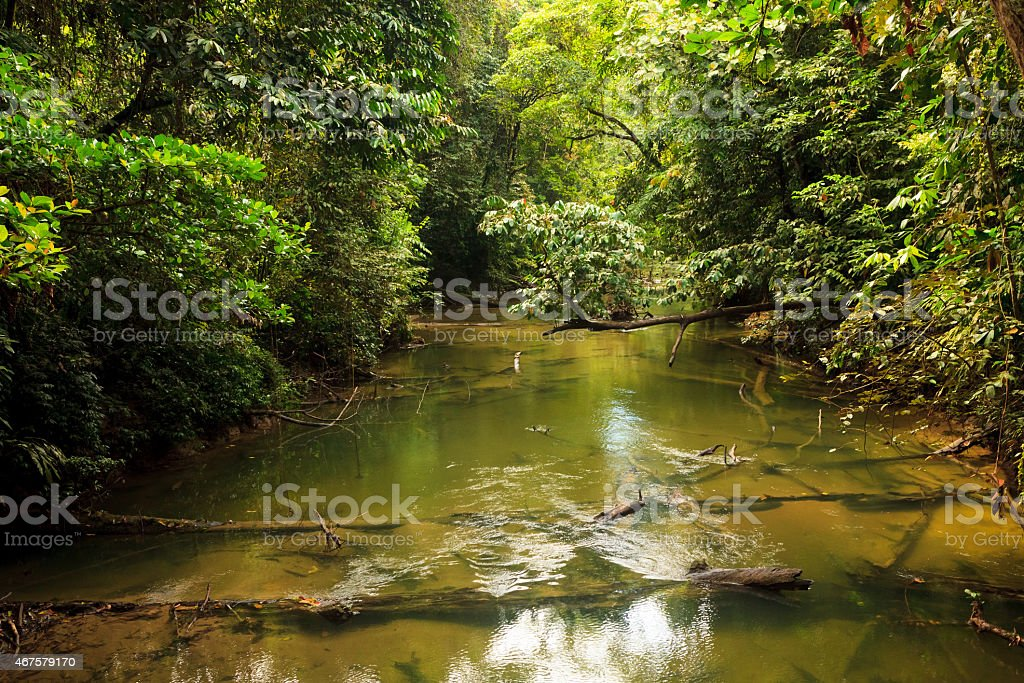 Small river in jungle stock photo