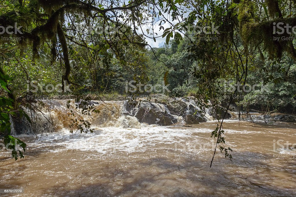 Small river in Kakamega Forest. Kenya, Africa stock photo