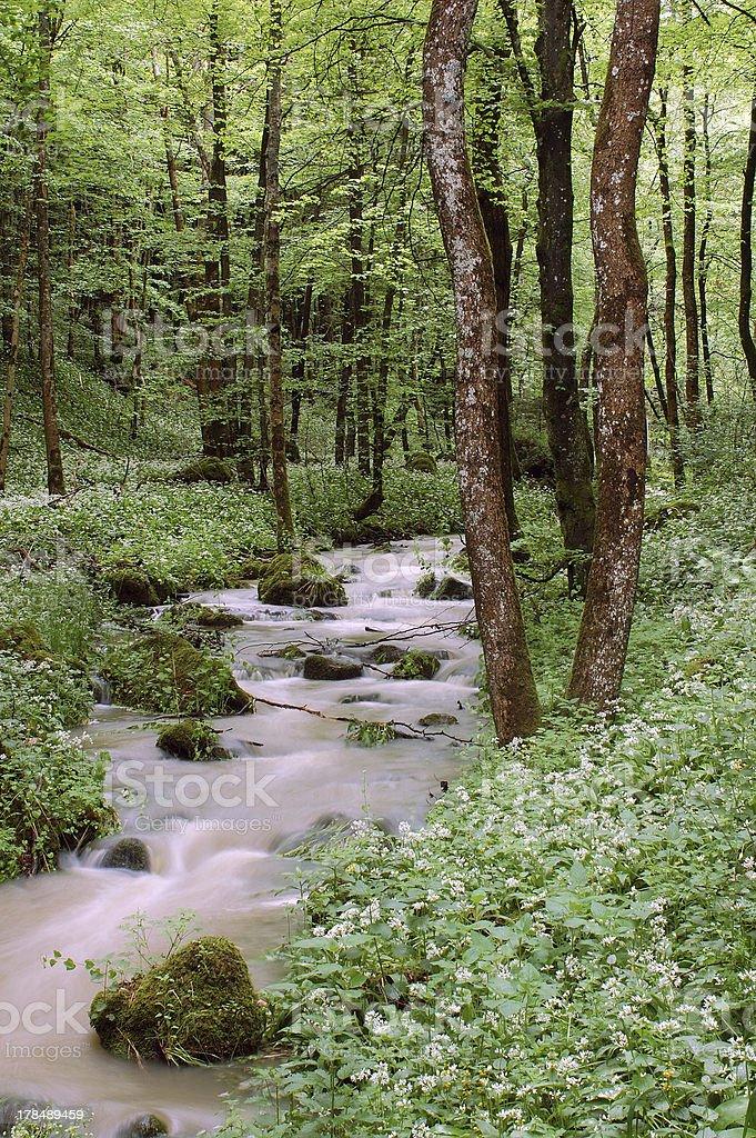 Kleiner Fluss im Wald – Foto