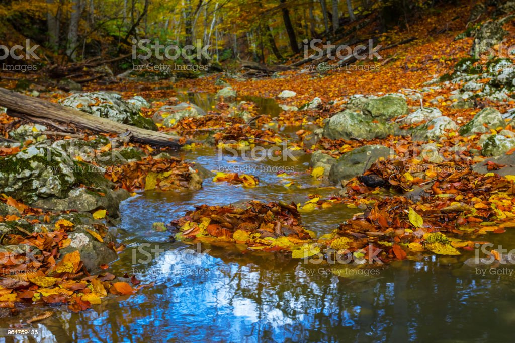small river rushing in a mountain canyon royalty-free stock photo