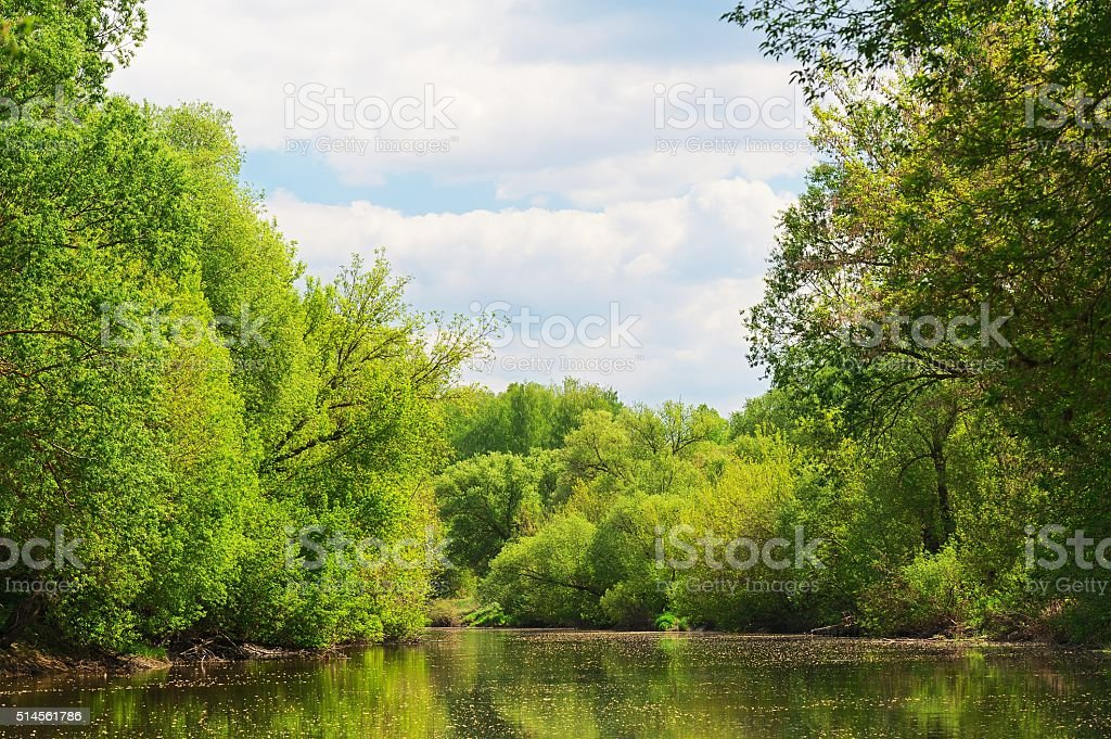 Small river with tall trees on banks and blue sky stock photo