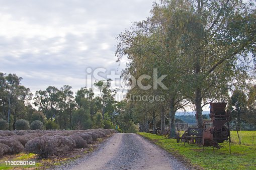 Small road in lavender country farm in afternoon