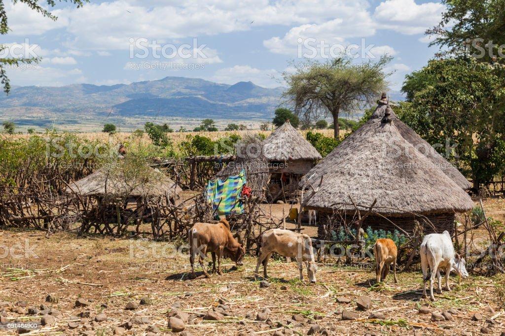 Small roadside farm. Omo valley near Konso. Ethiopia stock photo