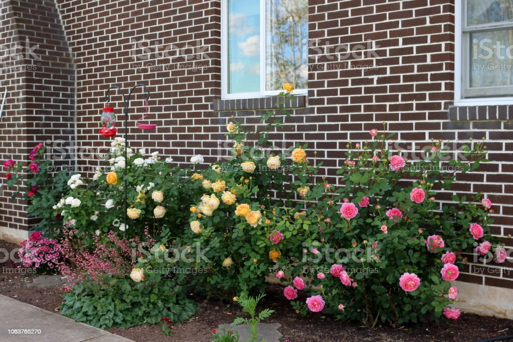 Small Rose Garden Stock Photo Download Image Now Istock