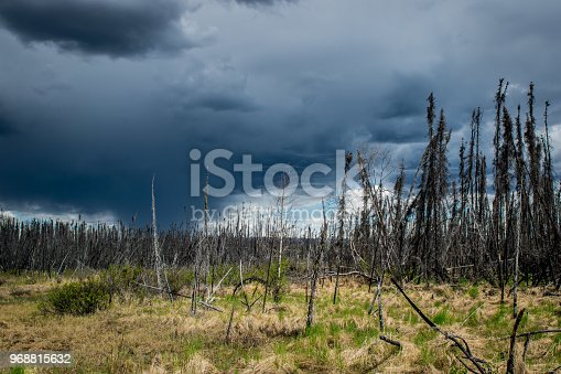 Dark cloudy sky with small shower over a burnt forest in Alaska, near the George Parks Hwy.