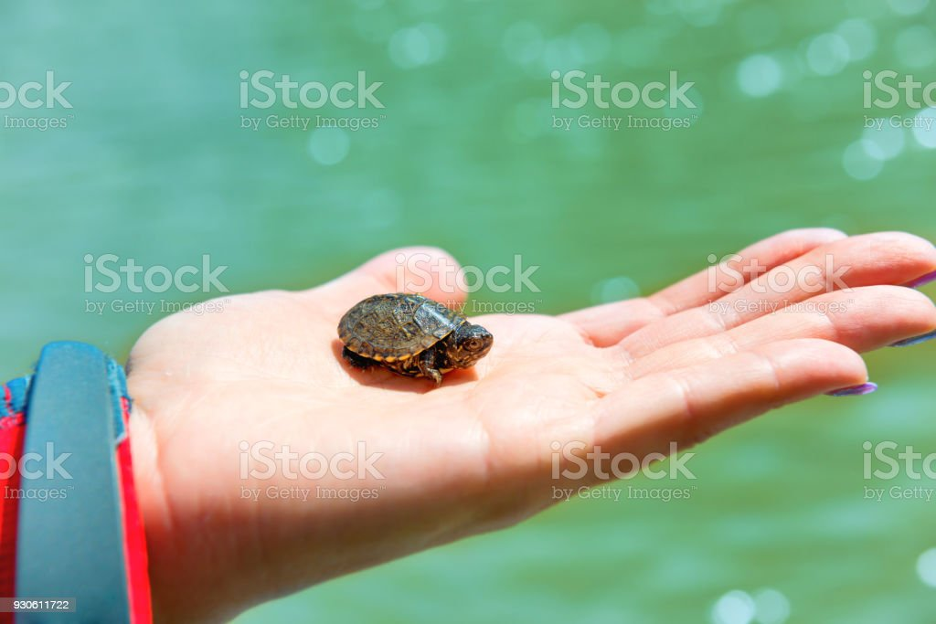 Small sea turtle stock photo