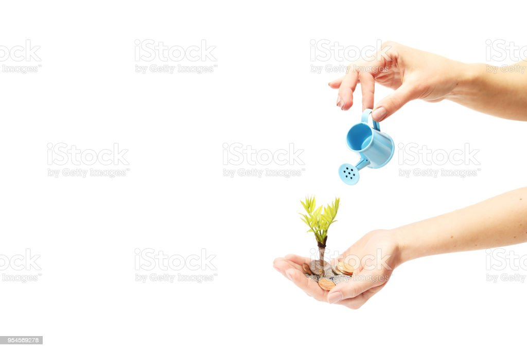 Small seedling growing and being watered by coins stock photo